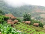 Rýžová pole v Sa Pa